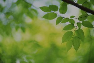 prodotti erboristici naturali 3 - Tecno-lio